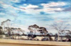 Tembys Trees